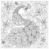 Hand drawn Peacock for anti stress Coloring Page Royalty Free Stock Photography