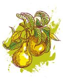 Hand drawn pears Stock Photo
