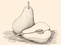 Hand drawn pears stock image