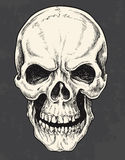 Hand Drawn Pen and Ink Skull Royalty Free Stock Photo