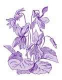 Violets. Hand drawn pen and ink violets botanical illustration. Colors can be changed easily Royalty Free Stock Photography