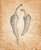 Hand drawn pencil chilli pepper on old paper background Royalty Free Stock Images