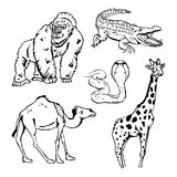 Hand-drawn pencil graphics, african animals set. Black and white logo, sign, emblem, symbol. Stamp, seal. Simple illustration. Sketch Royalty Free Stock Image