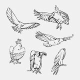 Hand-drawn pencil graphics. Birds of prey set. Birds of prey set. Bird engraved style emblem. Hand drawn style. Linocut, stencil vector art. Black and white Stock Image