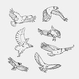 Hand-drawn pencil graphics. Birds of prey set. Birds of prey set. Bird engraved style emblem. Hand drawn style. Linocut, stencil vector art. Black and white Stock Photo