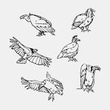 Hand-drawn pencil graphics. Birds of prey set. Birds of prey set. Bird engraved style emblem. Hand drawn style. Linocut, stencil vector art. Black and white Royalty Free Stock Photo