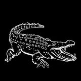 Hand-drawn pencil graphics, crocodile, alligator, croc. Engraving, stencil style. Black and white logo, sign, emblem Stock Photography