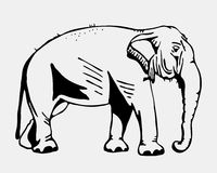 Hand-drawn pencil graphics, elephant. Engraving, stencil style. Black and white logo, sign, emblem, symbol. Stamp, seal Stock Photo