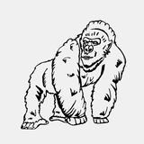 Hand-drawn pencil graphics, monkey, gorilla. Engraving, stencil style. Black and white logo, sign, emblem, symbol. Stamp Stock Photography