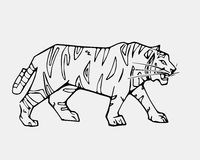 Hand-drawn pencil graphics, tiger head. Engraving, stencil style Royalty Free Stock Photography