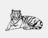 Hand-drawn pencil graphics, tiger head. Engraving, stencil style Stock Images