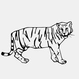 Hand-drawn pencil graphics, tiger head. Engraving, stencil style Royalty Free Stock Photo