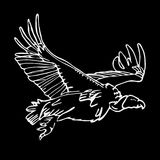 Hand-drawn pencil graphics, vulture, eagle, osprey, falcon, hawk Stock Photos