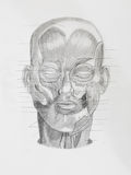 Hand drawn pencil illustratin, frontview of human head Stock Photography