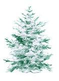 Hand drawn pencil illustration of spruce. Hand drawn illustration with spruce Stock Photos