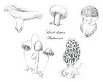 Hand-drawn pencil illustrations of the different mushrooms stock photography
