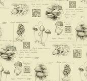 Hand-drawn pencil seamless pattern of the different mushrooms royalty free stock images