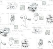 Hand-drawn pencil seamless pattern of the different mushrooms stock photo
