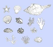 Hand drawn seashells and corals set on blue background stock illustration