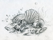 Hand drawn pencil sketch of peebles and shells. Hand drawn pencil sketch of various sea garbage. There are shells, little stones, corals and even several coins Stock Images
