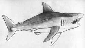 Hand drawn pencil sketch of a shark. With it's mouth open. Side view Royalty Free Stock Photos