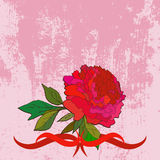 Hand drawn peony and copy space. Hand drawn red peony and copy space on grunge background Stock Photos
