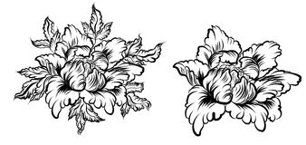 Hand drawn Peony flower.Chinese flower vector tattoo.Doodle art peony tattoo. Royalty Free Stock Photos
