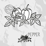 Hand drawn peppers Stock Photo