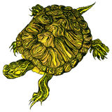 Hand-drawn pet Trachemys scripta scripta turtle. Hand-drawn pet yellow belly slider turtle illustration Stock Image