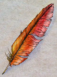 Hand drawn phoenix feather stock image