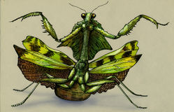 Hand drawn picture of angry mantis stock photography