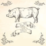 Hand drawn pig illustration. Stock Images