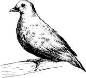 Hand drawn pigeon Stock Photo
