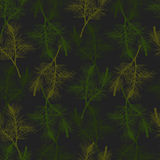 Hand drawn pine branch seamless pattern. Green and black Royalty Free Stock Images