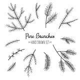 Hand drawn pine branches set. Hand sketched pine branches set  on white background Stock Photo