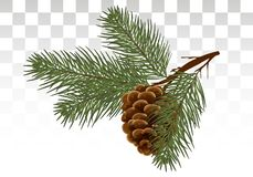 Free Hand Drawn Pine Cone And Fir Tree. Botanical Drawn Vector Illustration. Isolated Xmas Pinecones. For Greeting Stock Photo - 126039930