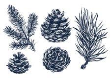 Hand drawn pine tree branch Stock Image