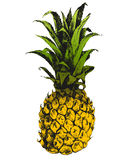 Hand drawn pineapple Royalty Free Stock Photos