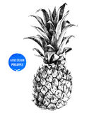 Hand drawn pineapple Stock Photo