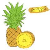 Hand drawn pineapple. Hand drawn decorative pineapple, design element. Vector illustration vector illustration