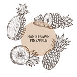 Hand drawn pineapple fruits Stock Photos