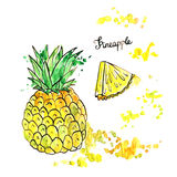 Hand drawn pineapple Stock Images
