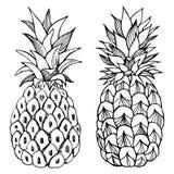 Hand drawn pineapple. Vector sketch illustration vector illustration