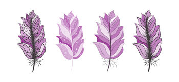 Hand drawn  pink color feathers set for your design Stock Photography
