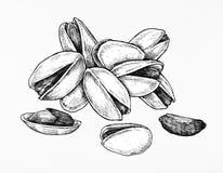 Hand drawn pistachio isolated on white background Stock Photo