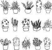 Hand drawn plants growing in pots.Home decoration.Vector illustration. vector illustration