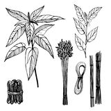 Hand drawn plants. Jute fibers. Black and white  illustration. Hand drawn plants. Jute fibers. Black and white line illustration of jute Royalty Free Stock Photo