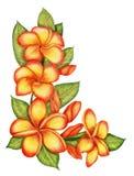 Hand-drawn Plumeria Corner Stock Photo
