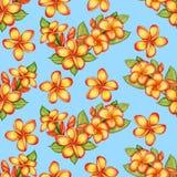 Hand-drawn Plumeria Seamless Pattern Royalty Free Stock Photos