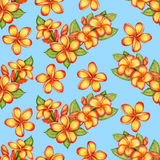 Hand-drawn plumeria seamless pattern. Gentle pattern with plumeria flowers Royalty Free Stock Photos